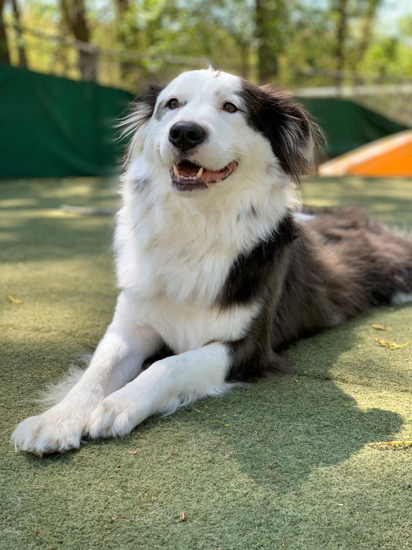 Happy Dog Training