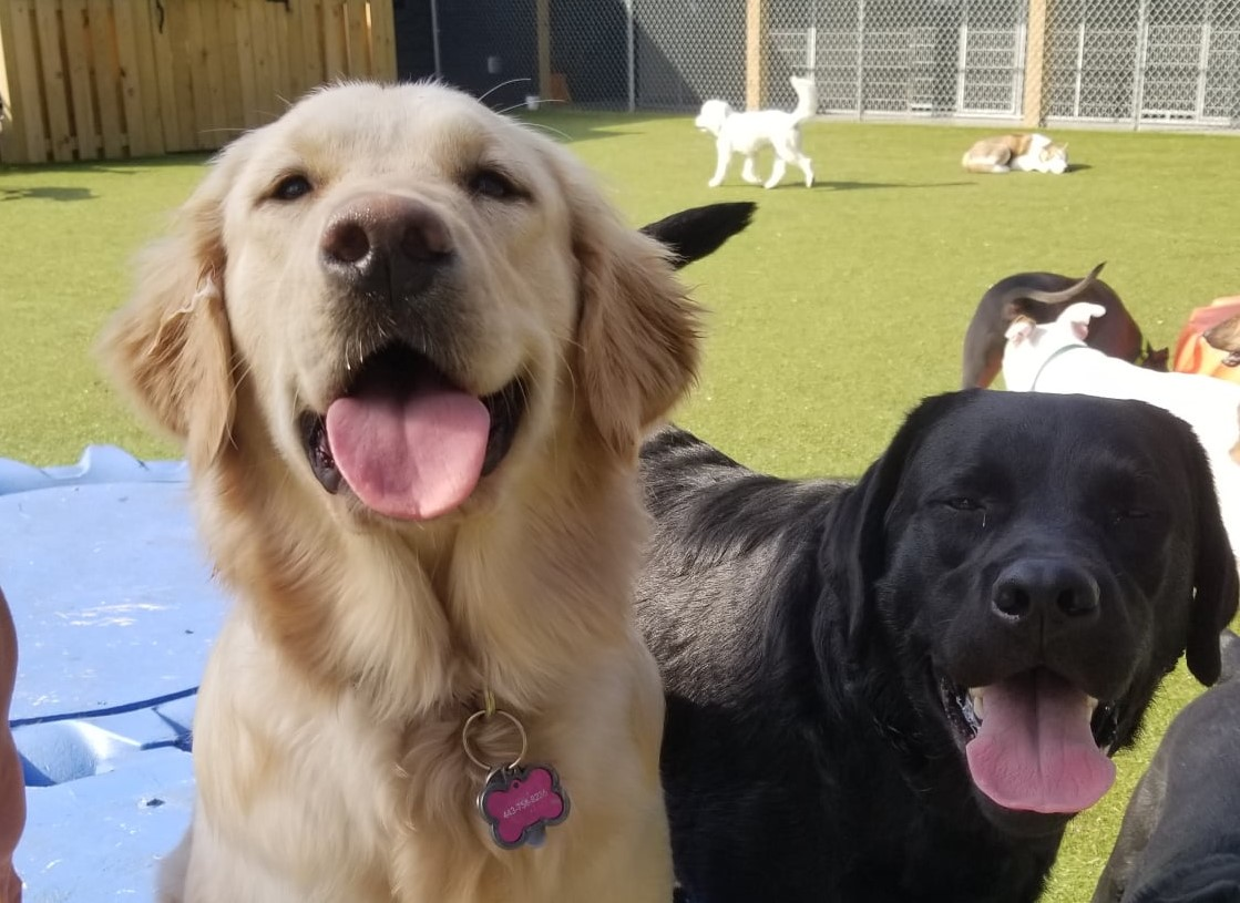 Happy dogs at Dogwood Acres