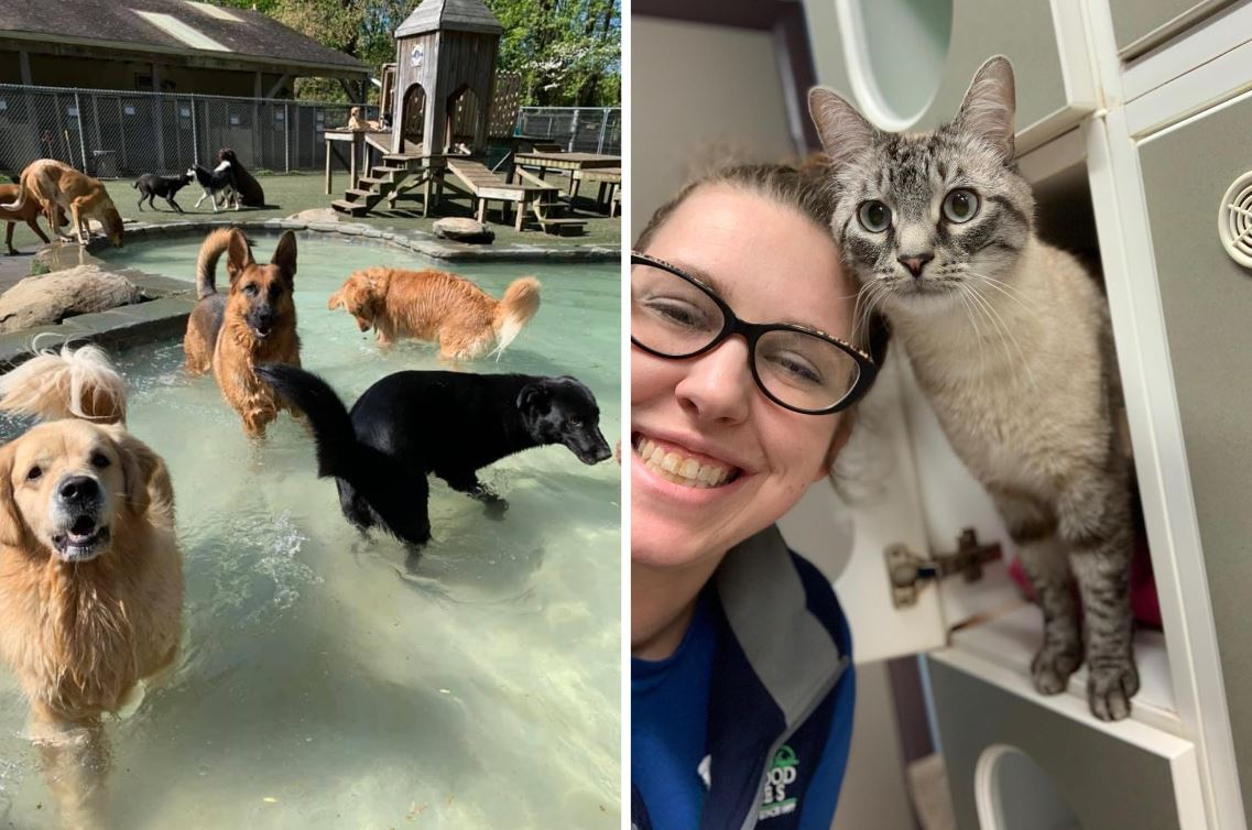 Pet's Vacations