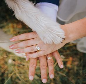 Wedding Pet Attendants