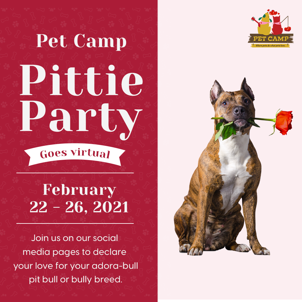 Pet Camp Pittie Party