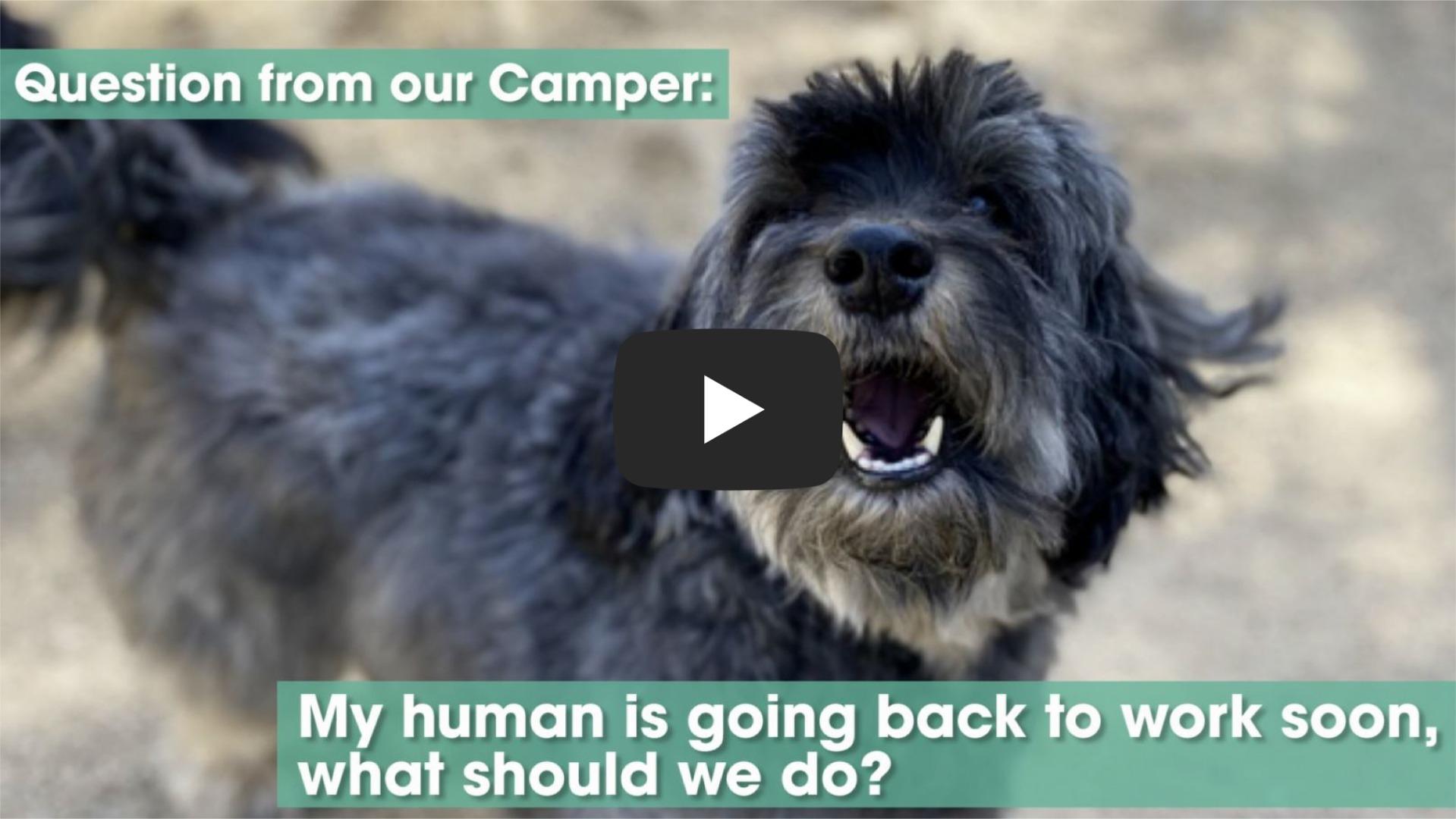 Watch Pet Camp Video